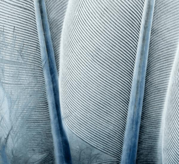 Treatment image texture